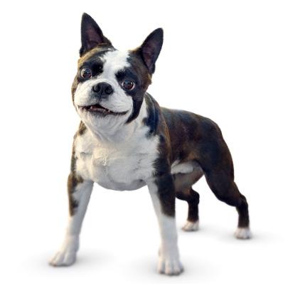 Vovsa hund